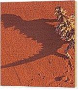 Desert Adapted Thorny Devil Australia Wood Print