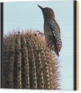 Desert Bird Atop Saguaro Wood Print