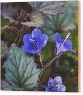 Desert Bluebells  Wood Print