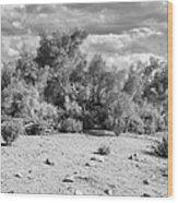 Desert Cloud Bw Palm Springs Wood Print