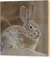 Desert Cottontail Rabbits Wood Print