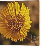 Desert Dandelion Wood Print