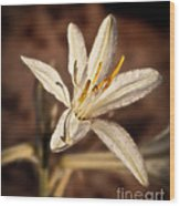 Desert Easter Lily Wood Print