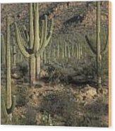Desert Guardians Wood Print