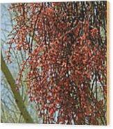 Desert Mistletoe Berries Wood Print