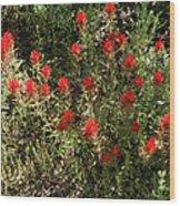 Desert Paint Brush Wood Print
