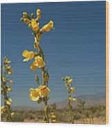 Desert Sweetpea Wood Print