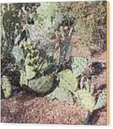 Desert's Collection Of Dried Flowers 3 Wood Print