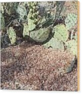 Desert's Collection Of Dried Flowers1 Wood Print