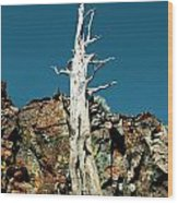 Desolation Wilderness Tree 2 Wood Print