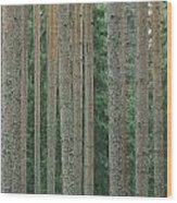 Detail Of Arrow-straight Evergreen Wood Print