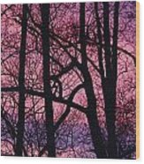Detail Of Bare Trees Silhouetted Wood Print