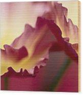 Detail Of Crimson Colored Rose Petals Wood Print