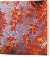 Detailed View Of Soft Coral Revealing Wood Print