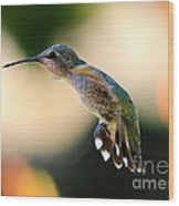 Determined Hummingbird Wood Print