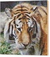 Detroit Tiger Wood Print