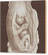 Development Of A Foetus In A Womb, 1891 Wood Print