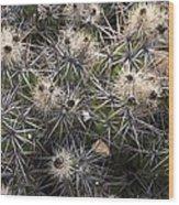 Devil's Club Cactus (gousonia Invicta) Wood Print