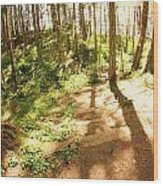 Devonian Park Pathway Wood Print