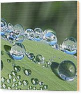 Dew Beads Wood Print