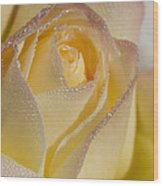 Dew Bejeweled Peace Rose Wood Print