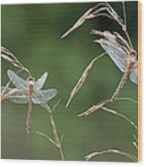 Dew Covered Dragonflies Wood Print