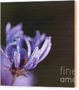 Dew-covered Purple Wildflower Wood Print