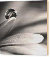 Dew Drop In Flower Petal Wood Print