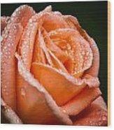 Dew Drop Tangerine Wood Print by Michael Putnam