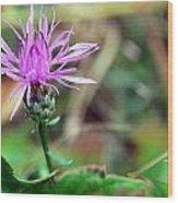 Dew Flower Wood Print