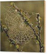 Dew Highlights An Orb-weaver Spiders Wood Print