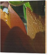 Dew Light And Shadows Wood Print