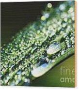 Dew On Grass Wood Print