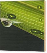 Dew On Leaf, Germany Wood Print
