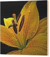 Dew On The Daylily Wood Print