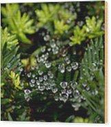 Dew Spheres Wood Print