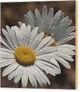 Dew Tell Oxeye Daisy Wildflowers Wood Print