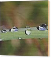 Dewdrops On Leaf Wood Print