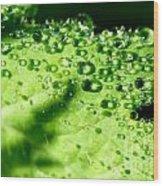 Dewdrops On Leaf Wood Print