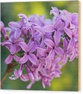 Dewdrops On Lilacs Wood Print
