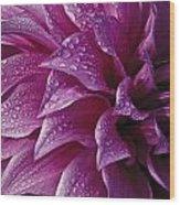 Dewy Dahlia Wood Print