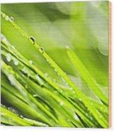 Dewy Green Grass  Wood Print