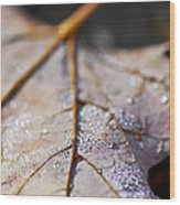 Dewy Leaf Wood Print by Elena Elisseeva