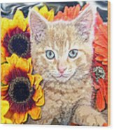 Di Milo - Sun Flower Kitten With Blue Eyes - Kitty Cat In Fall Autumn Colors With Gerbera Flowers Wood Print