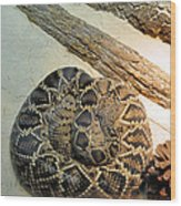 Diamond Back Rattler Wood Print by Jan Amiss Photography