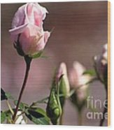Diana Rose Wood Print