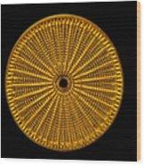 Diatom Alga, Arachnoidiscus Wood Print