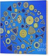 Diatom Arrangement Wood Print by M I Walker