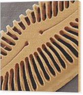 Diatom Frustule, Sem Wood Print