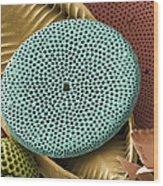 Diatoms, Sem Wood Print